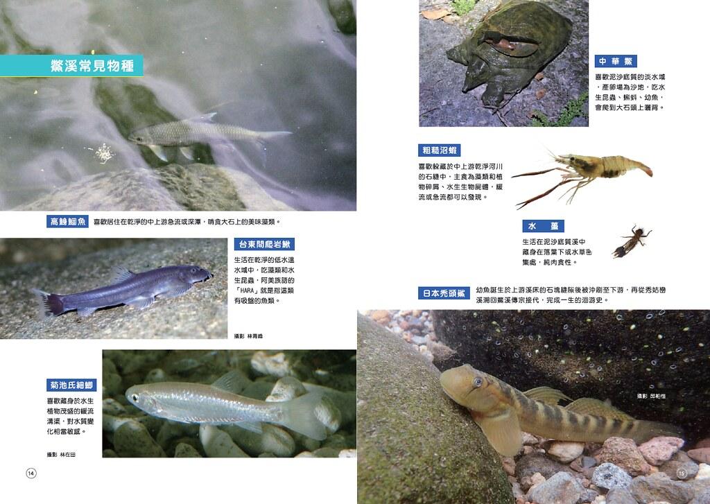 鱉溪常見物種包含中華鱉、日本禿頭鯊、台東間爬岩鰍等。會議資料