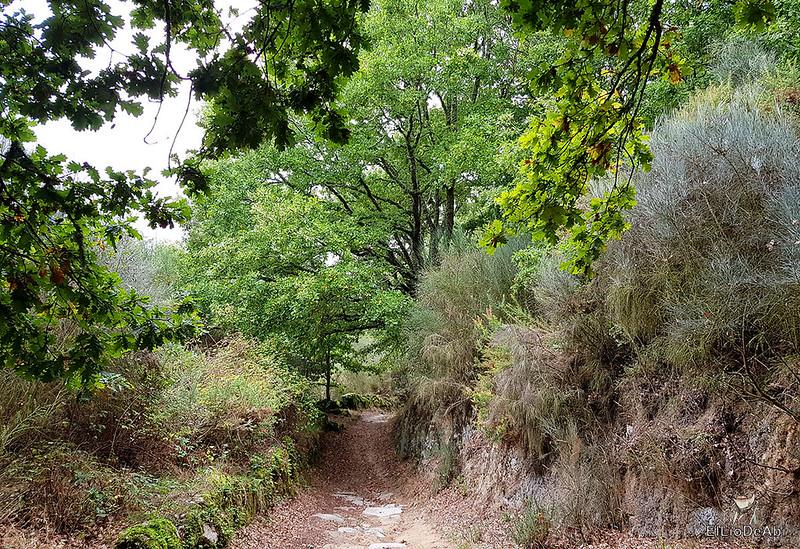 Un día en el Camino de Santiago Vía de la Plata en Allariz (11)
