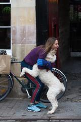 Cambridge pets