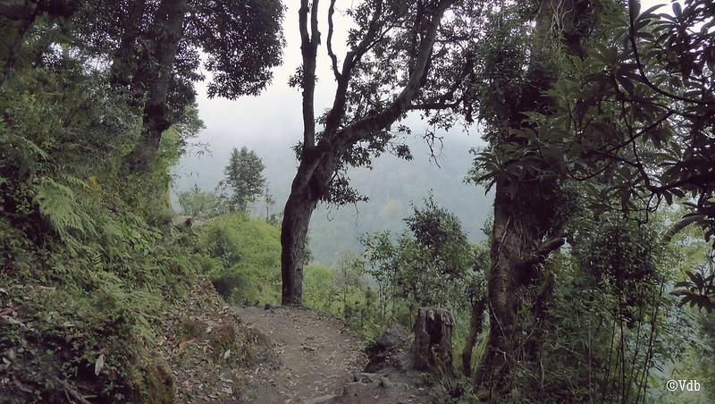 Tadapani