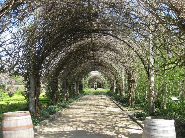 Looking East to West Down the Wisteria Walk  - Alowyn Gardens, Yarra Valley