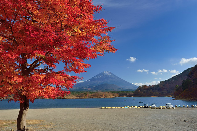 Maples and Mountain Fuji 富士楓紅