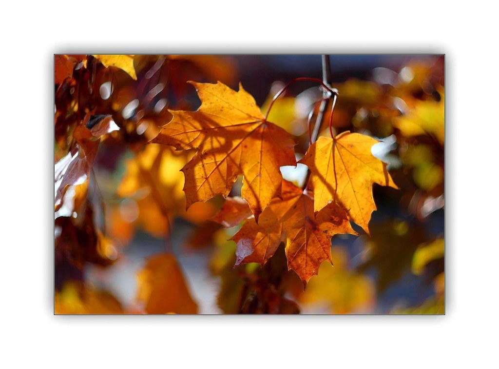 The light of autumn ...