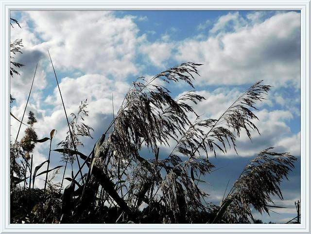 Trawa i wiatr.