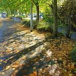 Autumn leaves in Preston