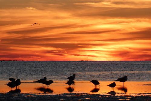 sunset beach seagulls birds sand silhouette reflection orange sky dusk