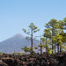 Teide National Parc-6107