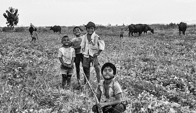Filipino Boys Tending to Water Buffalos - B&W Film