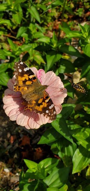 Butterfly Buffet 4