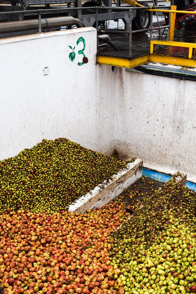 Pressing Apples for Thatcher's Cider
