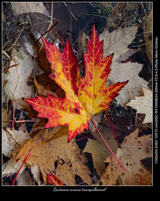 L'automne avance tranquillement!