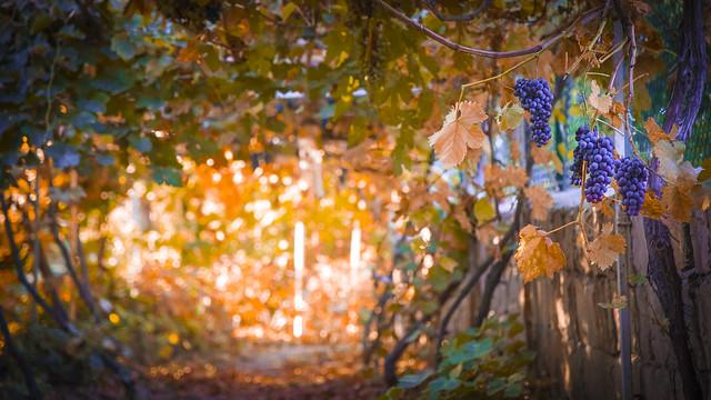 Beauties of autumn