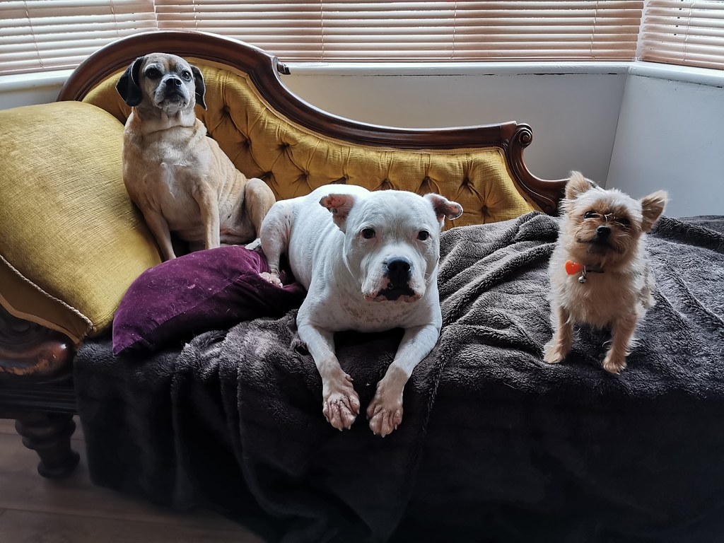 21 Oct 19 Lily, Buster and Taz.