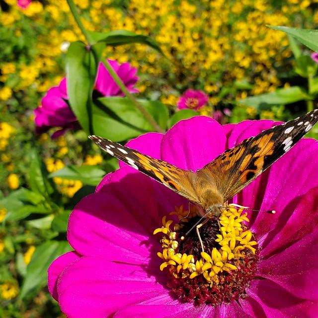 Butterfly Buffet 6