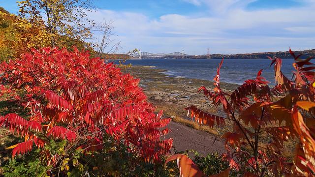 Automne, autumn - Parc Nautique de Cap-Rouge, PQ, Canada - 52734