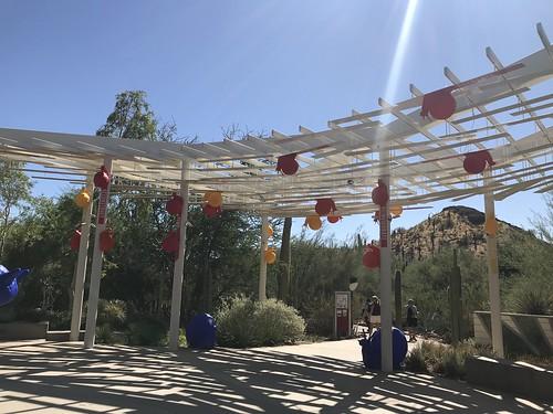Desert Botanical Garden-Phoenix-20191020-1985