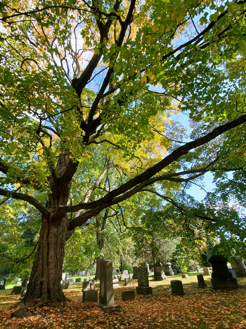 Mount Pleasant Cemetery Autumn