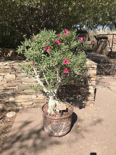 Desert Botanical Garden-Phoenix-20191020-2017
