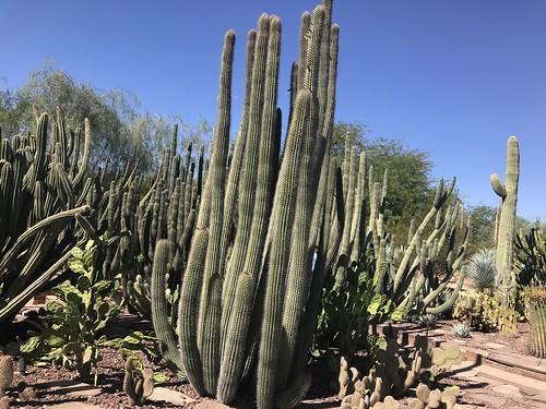 Desert Botanical Garden-Phoenix-20191020-1950