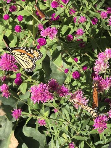 Desert Botanical Garden-Phoenix-20191020-1957