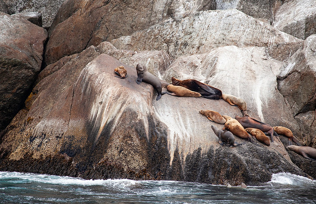 Alaska Sea Lion Haulouts