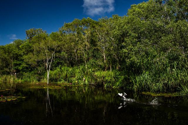Lake at Territory Wildlife Park