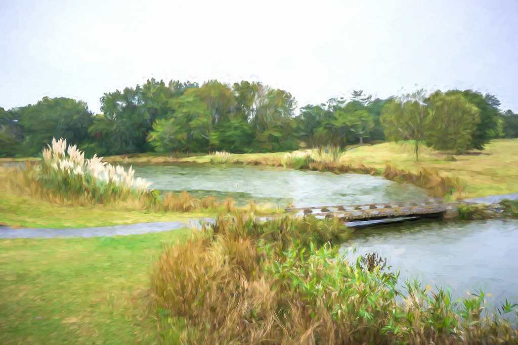 The pond at the golf course