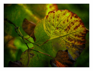 Autumn casts a spell..