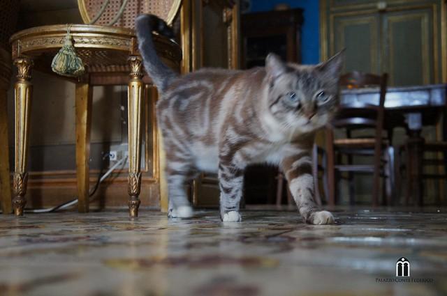 Cat's palace