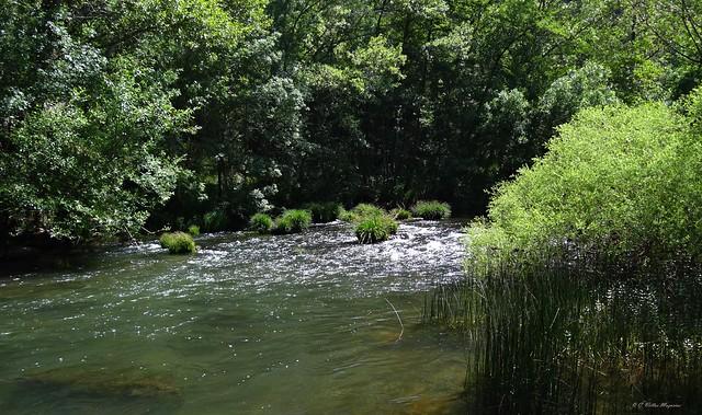 Río Arlanza en Covarrubias, Burgos, España.