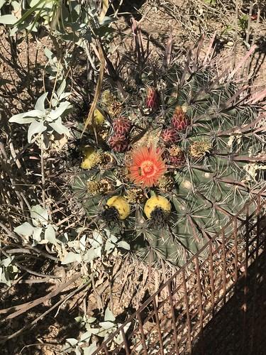 Desert Botanical Garden-Phoenix-20191020-1984