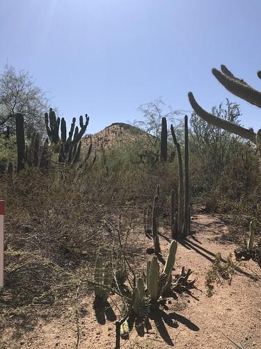 Desert Botanical Garden-Phoenix-20191020-1991