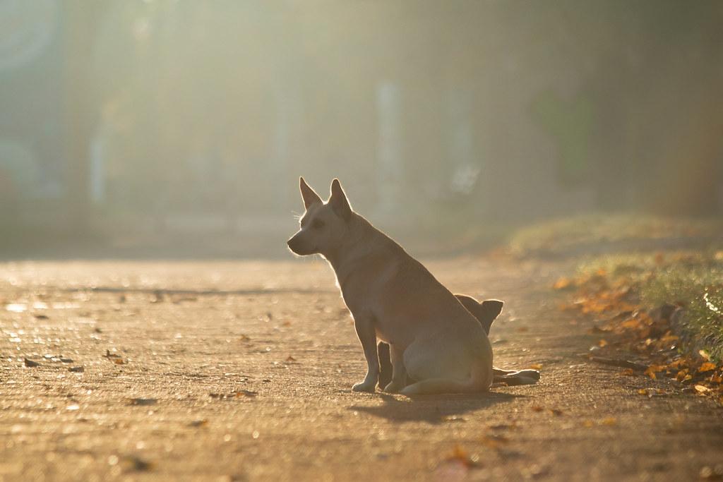 dogs_back_light