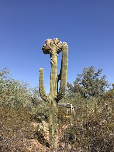 Desert Botanical Garden-Phoenix-20191020-2010