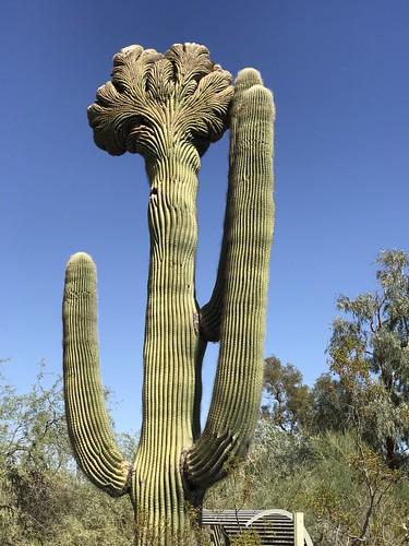 Desert Botanical Garden-Phoenix-20191020-2011