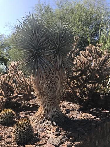 Desert Botanical Garden-Phoenix-20191020-1951