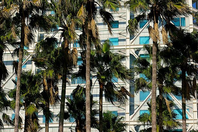Entre torres y palmeras