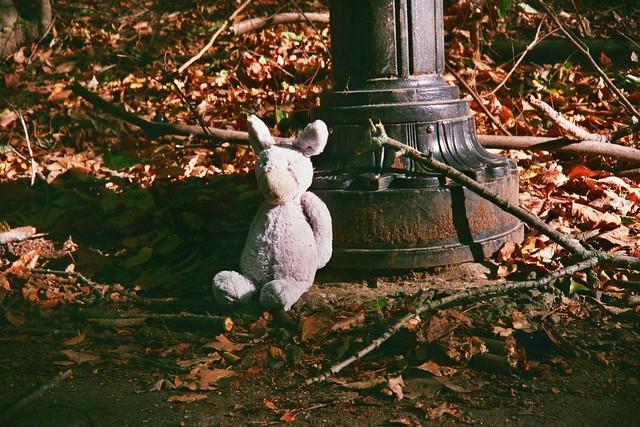 abandoned bunny