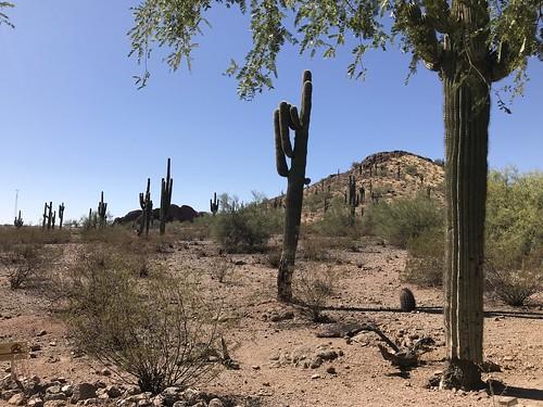 Desert Botanical Garden-Phoenix-20191020-2007