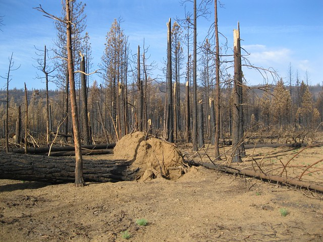 Deadwood left from the Eiler Fire of 2014