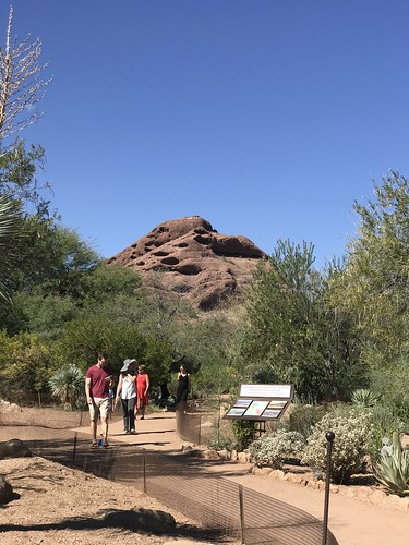 Desert Botanical Garden-Phoenix-20191020-1953
