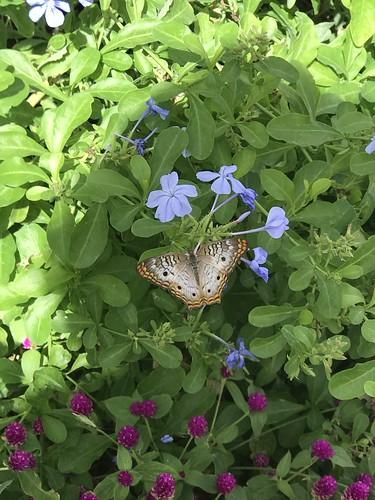 Desert Botanical Garden-Phoenix-20191020-1958
