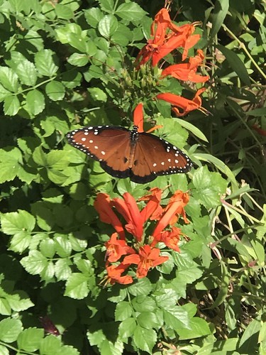 Desert Botanical Garden-Phoenix-20191020-1978