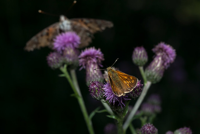 Orange on Purple, Times Two - _TNY_9980