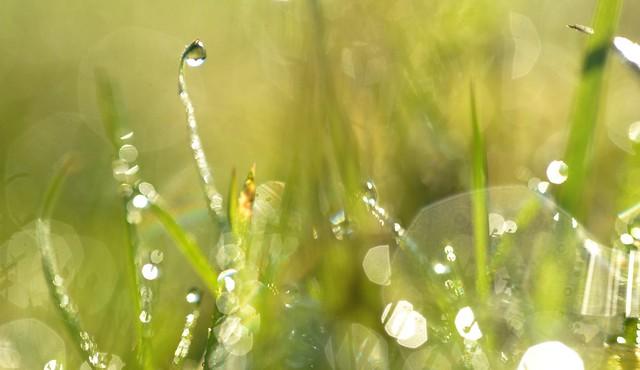 sunny morning dewscape