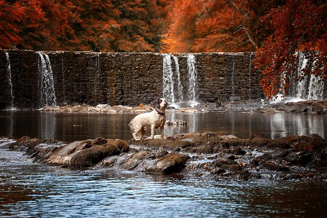 Autumn Falls & Rupert!