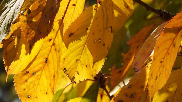 The Autumn Leaves 02