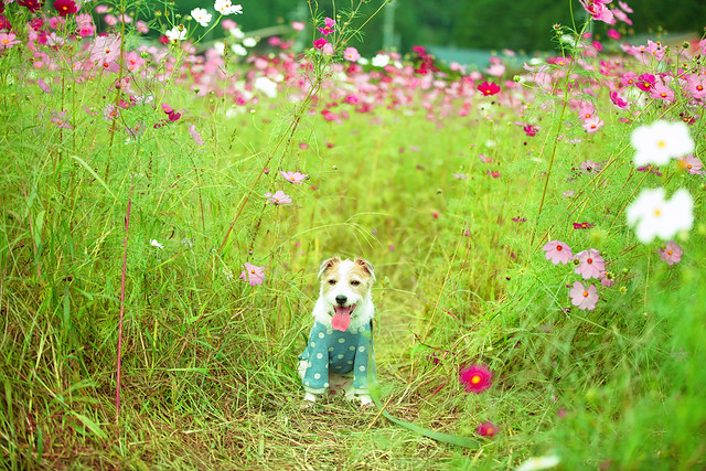 In the Field of Flowers