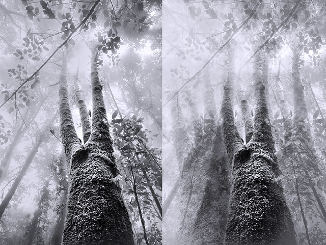To Tell a Forest From a Tree