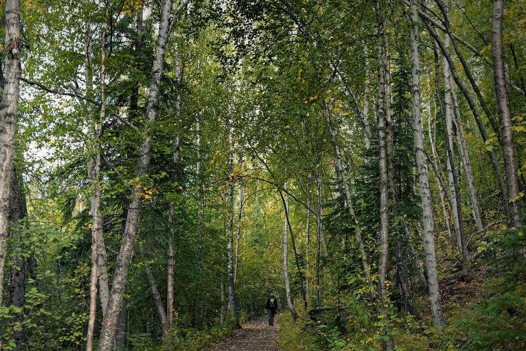 Traveling Along the Forest Byways of Alaska